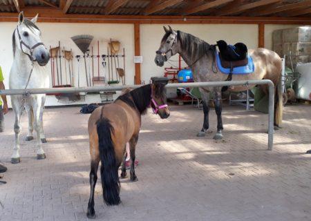 (2)Pferderassen