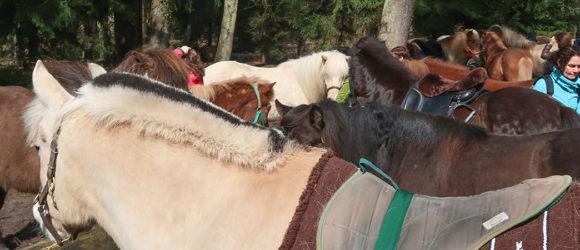 Urlaub mit Pferd im Pfälzer Wald Pferde am Rastplatz