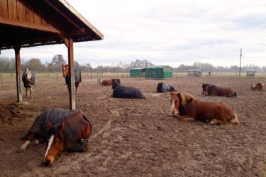 (3) Schlafende Pferde viel Platz EDIT