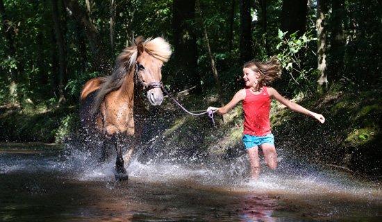natürlicher Aqua-Trainer für Pferde